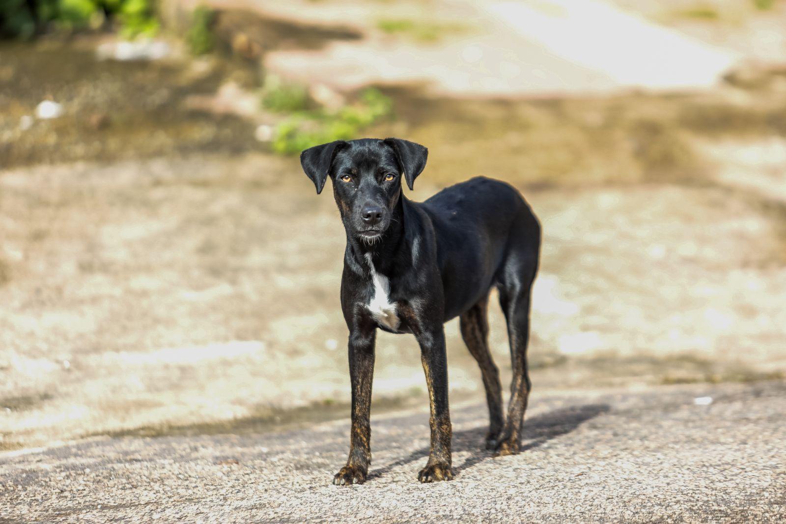 Campanha para imunizar cães e gatos em Porto Velho começa nesta segunda-feira (20)